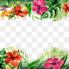Floral Pattern Background Vector Summer Flowers Transparent