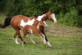 Foal Color Chart Common Horse Coat Colors The Horse