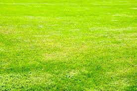 Full frame green grass field Pattern Pictures free textures and
