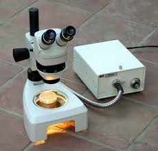 low cost gfp rfp fluorescence stereo microscope system