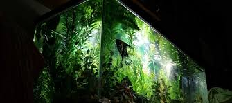 Image result for different aquarium maintenance companies new jersey