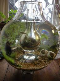 repurpose container water garden inspiration