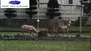 amorous deer mounts garden statues in edgerton wisconsin usa