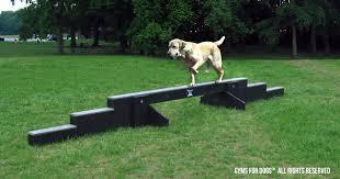 the dog gym dog park courses