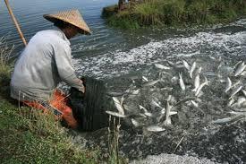 Mimpi Menangkap Ikan Bandeng Angka Jitu Pool303