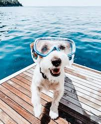 20+ The Coolest Ready For Summer Dogs - DIY Darlin' | Cute animals, Puppies, Cute dogs