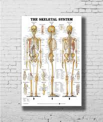 Us 4 5 8 Off Skeletal System Anatomical Chart Skeleton Medical Wall Sticker Home Decoration Silk Art Poster In Painting Calligraphy From Home