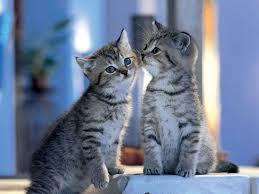 sweet cat love.  Cat 0 To Sweet Cat Love