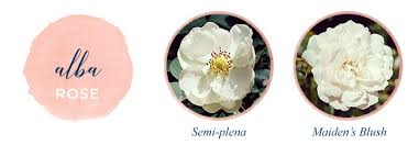 American Rose Size Chart Types Of Roses A Visual Compendium Ftd Com