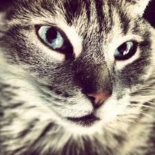 Traumdeutung Katze Was Bedeutet Eine Katze Im Traum Katzenträume