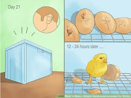 image titled make a simple homemade incubator for step 11