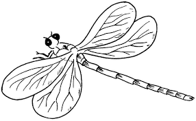 Small Picture Dragonfly 122 Animals Printable coloring pages