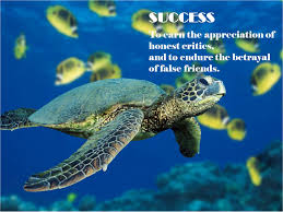 Turtle Quotes Famous quotes about 'Turtle' Sualci Quotes 16