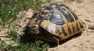 bedding for a hermann tortoise