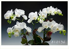 join the orchid club great gifts under 50