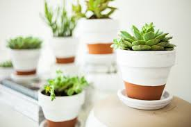painted pots succulents offbeat inspired
