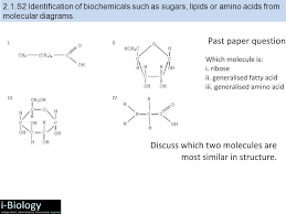 Nicholson Metabolic Pathways Chart Topic 2 Molecular Biology 2 1 2 4 The Background Is Just