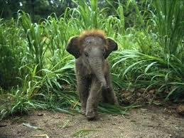 The 35 Cutest <b>Baby Elephants</b> You Will See Today «TwistedSifter