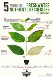 Freshwater Plants Nutrient Deficiencies Pflanzen Aquarium