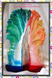 Experimento El Color De Las Plantas