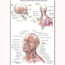 Neck Muscle Chart Mq2101 Health Chart Human Anatomy Head And Neck Body Picture Hot Art Poster Top Silk Light Canvas Home Decor Wall Picture Print