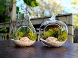 Air Plant Glass Containers