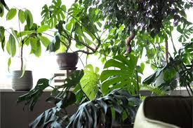 18 large low light houseplants to bring