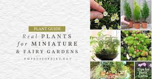 living plants for miniature gardens