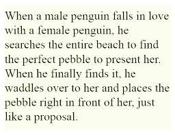 Penguin Love Quotes Impressive Emporer Penguin Love Pebble