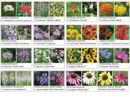 Small Picture Pollinator Garden Design Garden ideas and garden design