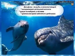 Дельфины удивительные млекопитающие Блог Татьяны Саксон дельфин животное дельфины млекопитающие реферат дельфины интересно о дельфинах
