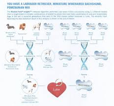Dog Dna Chart Monday Mischief Lukes Dna Revealed Wire Haired