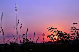 grass field sunset. Grass Field In Sunset T