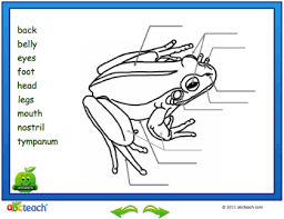 Parts Of A Frog Smart Exchange Usa Frogs