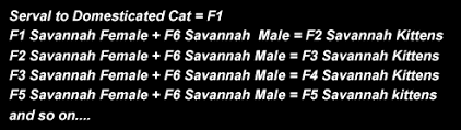 savannah cat chart savannah cat f generations explained what the f mean in