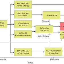E7 Pay Chart Flow Chart Showing The Guidelines For Hpv E6 E7 Mrna Testing