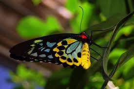 real beautiful colorful butterflies. Modren Real Beautiful Colorful Butterfly On Real Beautiful Colorful Butterflies L