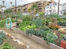 community gardening. Community Gardening T