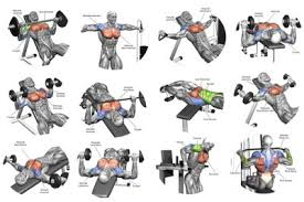 Chest Workout Tumblr