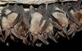 rabies in humans symptoms and treatment healdove rabies can be transmitted through the air in locations a heavy viral load spelunkers