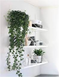 ivy is one of the best indoor vines it can easily adapt to many light conditions this fast growing vine has evergreen foliage that remains green even in