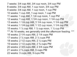 Puppy Feeding Chart Golden Retriever 28 Interpretive Golden Retriever Feeding Chart