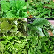 Buy Leafy Vegetables Combo Pack Of 6 Seeds Online In India