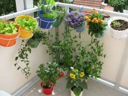 Small Picture Garden Design Garden Design with Home Gardening Tips Hindi Living