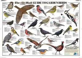 Get Your Free Garden Bird Wall Chart In This Weeks Mail On