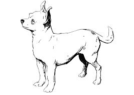 Kleurplaat Hond Chihuahua Afb 13704 Images