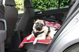the best dog car seats booster seats
