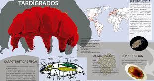 COSMOS-El UNIVERSO: los Tardígrados