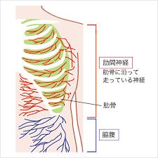 右 肋骨 下 痛み