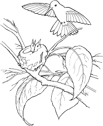 Small Picture Free Printable Hummingbird Coloring Pages For Kids 21474